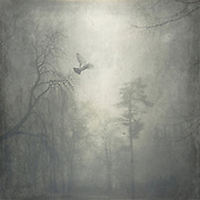 Park on a misty day - zexturized photograph<br /> <br /> Prints & more: http://society6.com/DirkWuestenhagenImagery/sound-of-beating-wings_Print