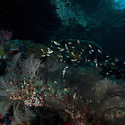 Dive Spot: Gorgonian Passage