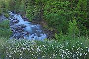 Sinclair Creek flowing into Sinclair Canyon, Kootenay National Park, British Columbia, Canada