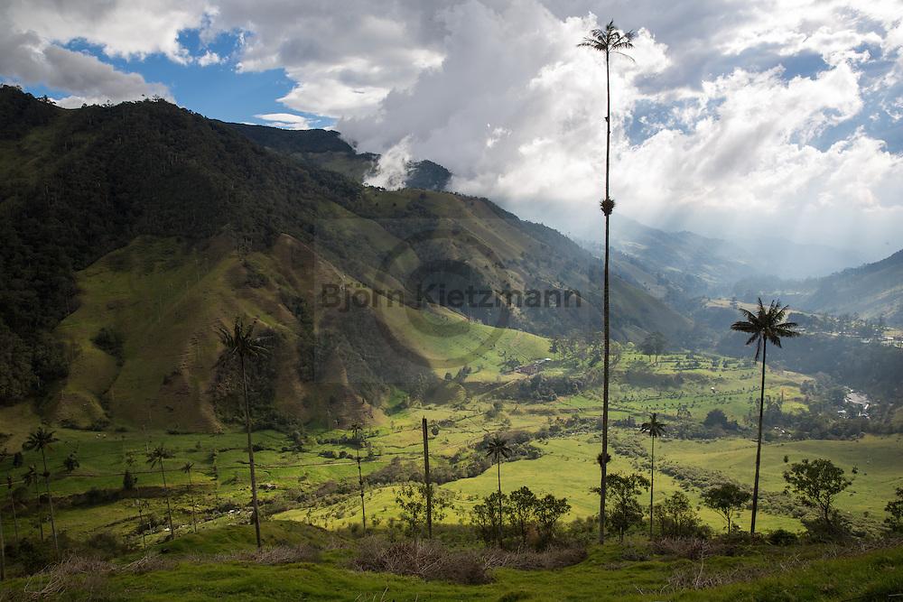 Salento, Quindío, Colombia - 06.09.2016          <br /> <br /> Cocora valley. Impression of the Colombian coffee region. Beside the small village Salento is a popular tourist spot Cocora valley, in which the Quindio wax palms grow.<br /> <br /> Cocora Tal. Eindruecke aus der kolumbianische Kaffeeanbauregion. Neben dem kleine Dorf Salento liegt das bei touristisch beliebte Cocora Tal, in welchem die Quindio Wachspalme wachsen.<br /> <br /> Photo: Bjoern Kietzmann