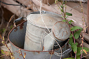 An old water sprinkling can sits among the weeds. Missoula Photographer