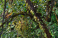 Picture of part of a rainforest at Tongbiguan nature reserve, Dehong prefecture, Yunnan province, China