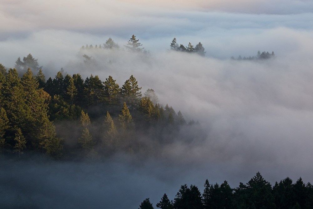 summer in the bay area brings in the low fog that coats the coast and blankets the coastal conifers creating shapes that look like islands in the clouds, it's quite a beautiful site to witness.