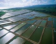 Prawn Farm, Kahuku, Oahu, Hawaii<br />