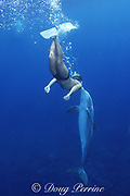 JoJo, a wild sociable bottlenose dolphin, Tursiops truncatus, gets a kiss from friend and dolphin warden Dean Bernal, Turks and Caicos ( Western Atlantic Ocean ) MR 150