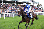 VINTAGE BRUT (2) ridden by David Allan and trained by Tim Easterby winning The Listed coral.co.uk Rockingham Stakes over 6f (£50,000)  during the October Finale meeting at York Racecourse, York, United Kingdom on 13 October 2018. Pic Mick Atkins