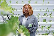 Portrait for UNEP Switch Africa Green program
