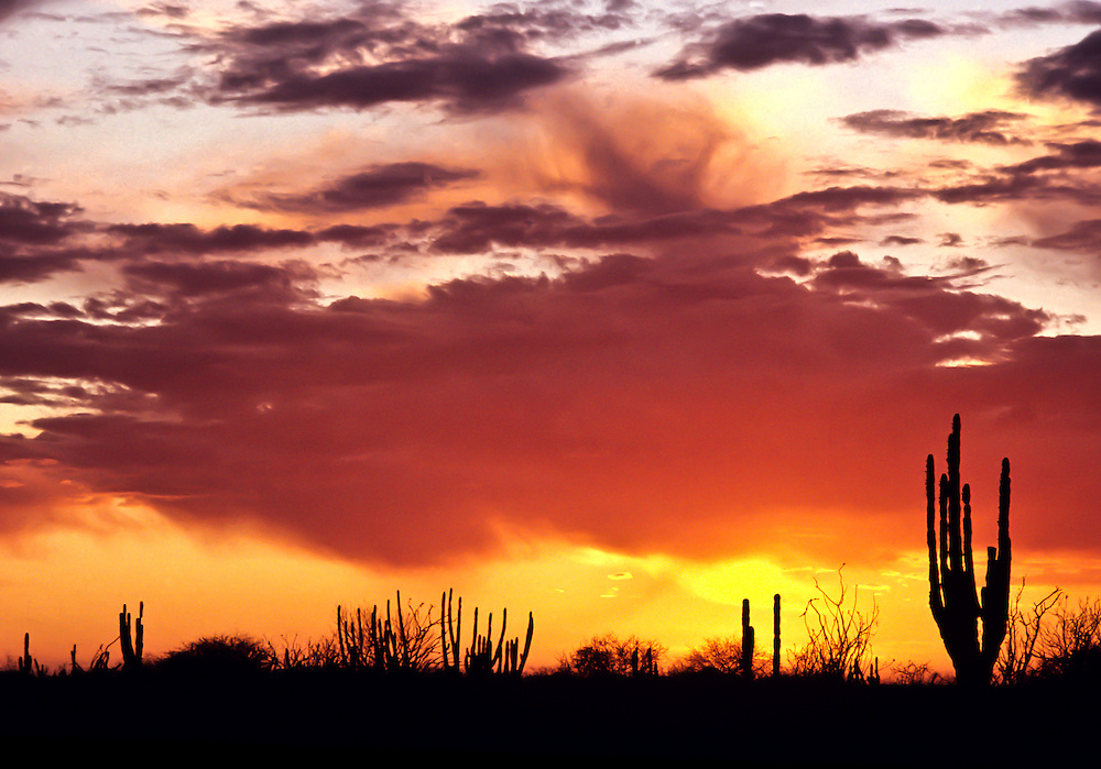 Desert sunset in Baja California.