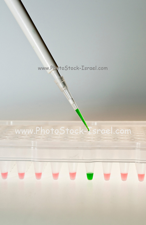 Enzyme-Linked Immunosorbent Assay ELISA in a 96 well plate