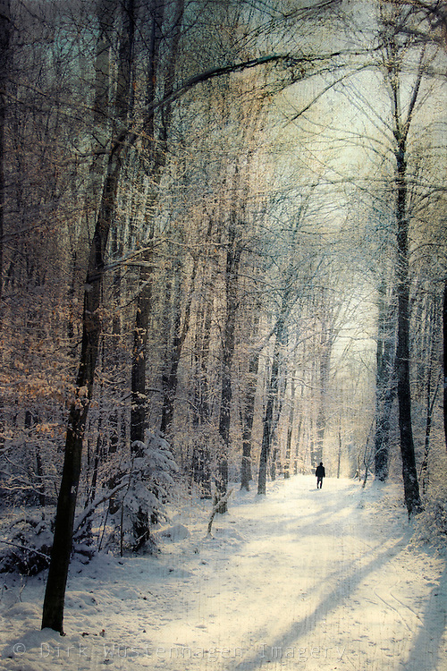 Person walking through a sunlit winter forest.<br /> Prints & m0re: