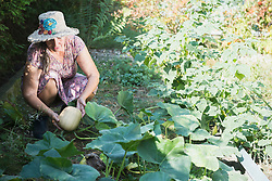 Senior woman harvesting pumpkin in a garden, Altoetting, Bavaria, Germany