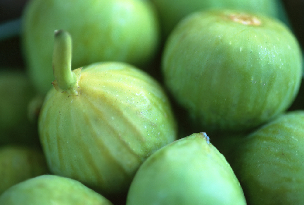 Close up selective focus photo of a bunch of Calimyrna Figs