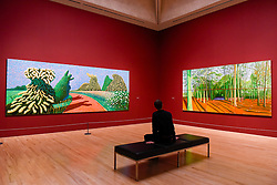 """© Licensed to London News Pictures. 06/02/2017. London, UK. A staff member views (L to R) """"May Blossom on the Roman Road"""" and """"Woldgate Woods, 6 & 9 November"""" at the preview of the world's most extensive retrospective of the work of David Hockney at the Tate Britain, which will be on display 9 February to 29 May 2017. Photo credit : Stephen Chung/LNP"""