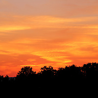 """""""Paint the Night Bright""""<br /> <br /> Glowing orange and yellow hued sunset and tree silhouette!!<br /> <br /> Sunset Images by Rachel Cohen"""