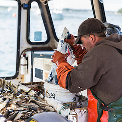 Captain Frank Smith salts bait in the wheelhouse of his boat, 'Miss Carol,' at Great Wass Lobster in Beals, Maine.