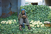 Indian man selling cauliflowers keeps them cool with wall of leaves in Old Delhi at Daryagang fruit and vegetable market, India