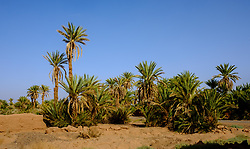 A small oasis near Mhamid in southern Morocco<br /> <br /> (c) Andrew Wilson | Edinburgh Elite media