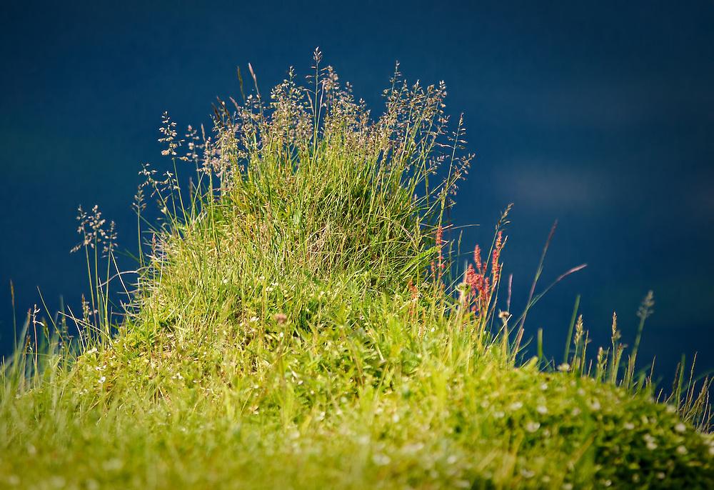 Norway - Grass rise near Burfjord