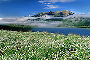 Summer flowers and low fog surround Crested Butte, Colorado