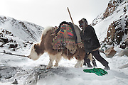 A yak refuses to go on. Walking on the frozen Wakhan river, covered up in snow, a Kyrgyz caravan on its way to the lower valley.From Kher Metek to Langar...Trekking back down from the Little Pamir, with yak caravan, over the frozen Wakhan river.