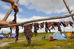"""Dene First Nation youth hang fresh caribou meat to dry at a campsite along the Thelon river August, 2011.  The Thelon is the largest and most remote game sanctuary in North America, which almost no one has heard of.  For the Akaitcho Dene, the Upper Thelon River is """"the place where God began.""""  Sparsely populated, today few make it into the Thelon. Distances are simply too far, modern vehicles too expensive and unreliable. For the Dene youth, faced with the pressures of a western world, the ties that bind the people and their way of life to the land are even more tenuous. Every impending mine, road, and dam construction threatens to sever these connections.(Photo by Ami Vitale)"""
