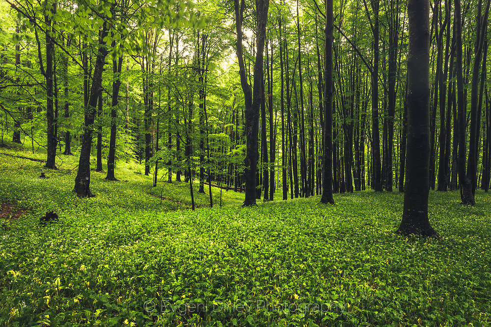 Steneto forest reserve in Central Balkan National Park