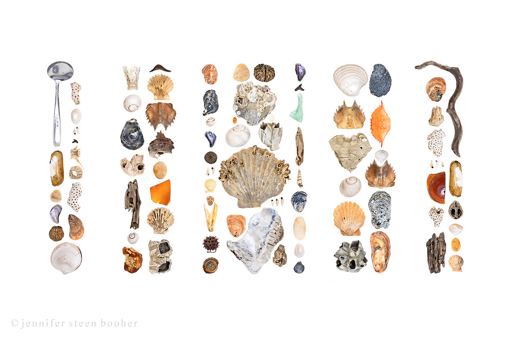 Most of these are fossils from the Calvert Cliffs, some are newly deceased contemporary critters. I'm still working on identifications.