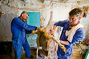 Miguel Martinez and his brother Paco skin a sheep they slaughtered for Easter at their farm in Zarzuela de Jadraque, Spain.  (Miguel Angel Martinez Cerrada  is featured in the book What I Eat: Around the World in 80 Diets.)