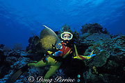 diver wearing gloves grabs live coral to stabilize <br /> herself, Cozumel, Mexico  ( Caribbean Sea )<br /> Mr 110