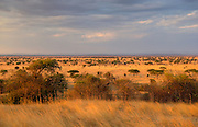 Serengeti Plains,Tanzania, East Africa