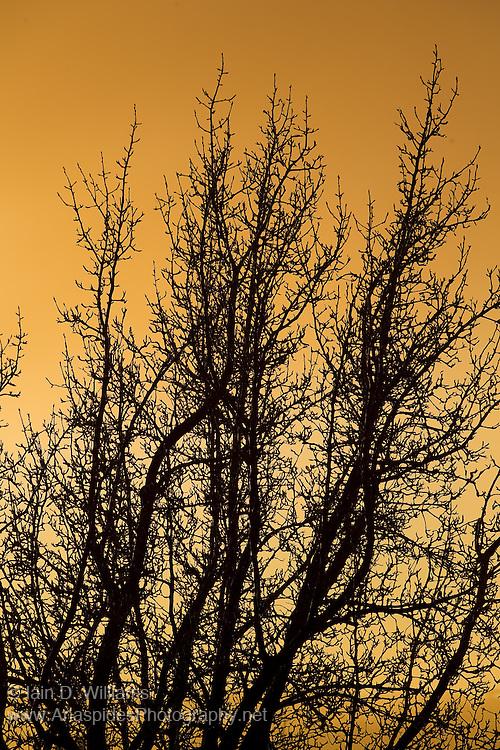 Pear Tree Sunrise, Tasmania