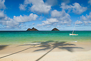 Palm Tree shadows on Lanikai Beach, Mokulua Islands offshore, Oahu, Hawaii