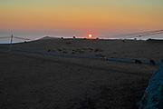 Pasture near Dillon Beach, Marin County, California, USA
