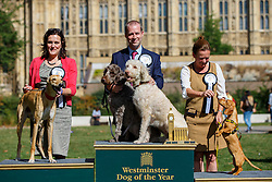 © Licensed to London News Pictures. 08/09/2016. London, UK. JONATHAN REYNOLDS MP (C) wins the Westminster Dog of the Year competition with his dogs 'Clinton' and 'Kennedy' in Victoria Tower Gardens, London on Thursday, 8 September 2016. REBECCA HARRIS MP (L) gets the second price with her Lurcher dog 'Milo' and LIZ SAVILLE ROBERTS MP (R) gets the third price with her rescue dog 'Fiona'. Photo credit: Tolga Akmen/LNP