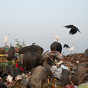 Located next to a lake, a visit to one of the main garbage dump in Kolkata.