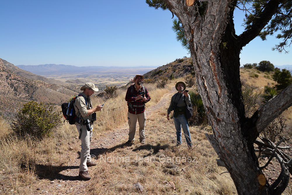 Border BioBlitz, March 3, 2018, Coronado National Memorial, Hereford, Arizona, USA. Taylor Edwards, left, Myles Traphagen and Robert Weissler discuss the identity of a tree along the Arizona Trail.