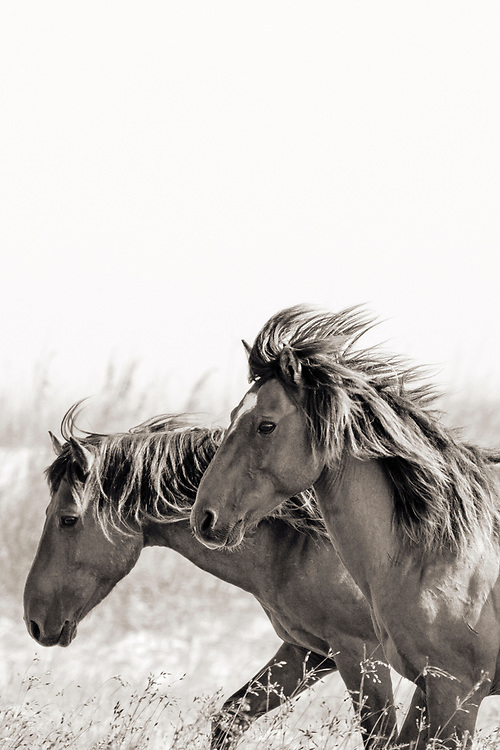 """""""The only impossible journey is the one you never begin"""" ~ Anthony Robbins<br /> <br /> Tracie Spence's fine art photography series of The Spanish Wild Mustangs."""