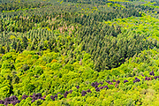 Nederland, Utrecht, Gemeente Baarn, 13-05-2019; bossen in het voorjaar op landgoed Hooge Vuursche.<br /> Forests in the spring on the Hooge Vuursche estate.<br />  <br /> luchtfoto (toeslag op standard tarieven);<br /> aerial photo (additional fee required);<br /> copyright foto/photo Siebe Swart