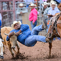 062114       Cable Hoover<br /> <br /> Steer wrestler Ethan Randall grabs hold as he slides from his saddle during the Lions Club Rodeo Saturday at Red Rock Park.