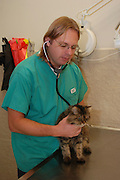Vet Examines a cat in a veterinary clinic