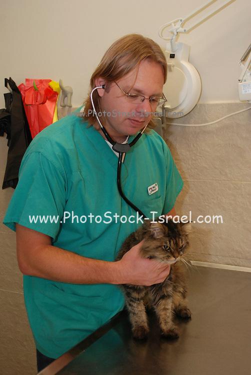 Vet Examines a cat in a veterinary clinic