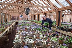 John Massey in the hepatica greenhouse at Ashwood Nurseries