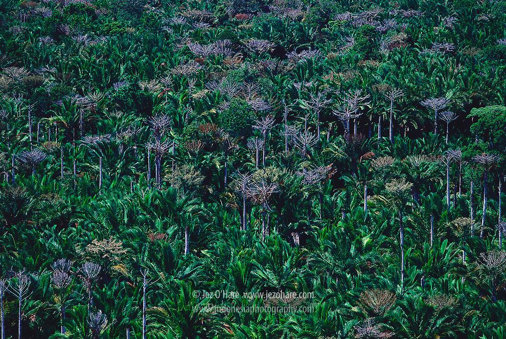 Bintuni Bay area, West Papua, Indonesia.