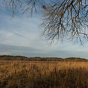 The Concord River passes through the Great Meadows National Wildlife Refuge.