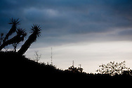 Sunrise behind Yucca in the Lower Rio Grande Valley, Texas.