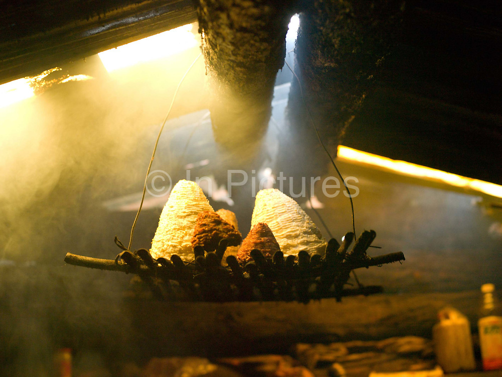 Yak cheese drying over an open wood fire in a Tibetan yak herders hut, Sheng Amu, Yunnan Province, China. The shape and texture of the cheese is made by using a bamboo basket mould.