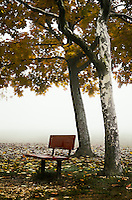 An empty bench under a couple of Buttonwood trees in the morning fog.