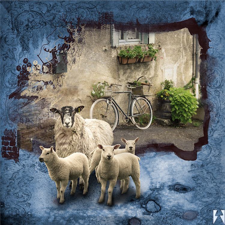 Le Velo, the bike leaning against the wall along a French street with potted plants inside a classic blue ornate texture outside which is a sheep and three lambs.