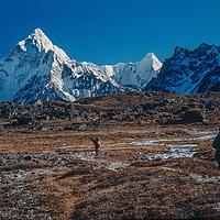 Trekkers hike through Dzongla meadows in the Khumbu region of Nepal's Himalaya. Ama Dablam rises in the background.