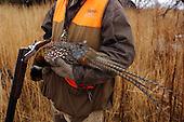 Pheasant Hunting Stock Photos